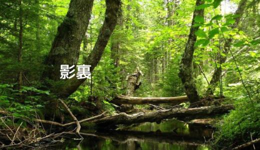 綾野剛・松田龍平共演:映画「影裏」あらすじ・感想|動画配信まとめ